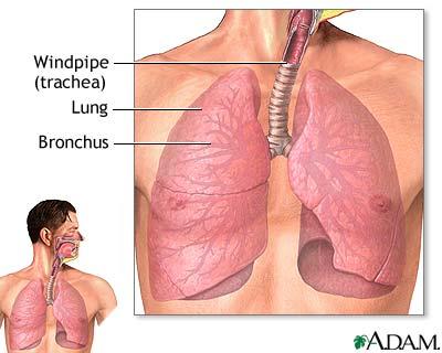 lungs1.jpg