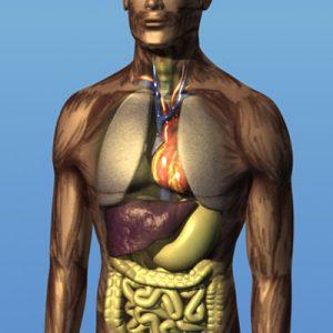 Organ Health Herbal Supplements